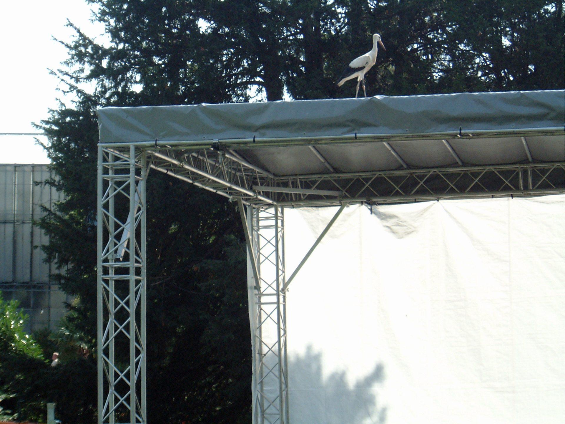 Storch auf unserer Bühne